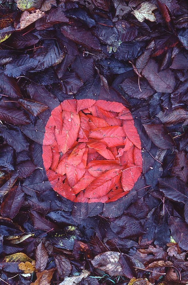 Andy Goldwworthy Red Cherry Leaf Patch, Cumbria 1984