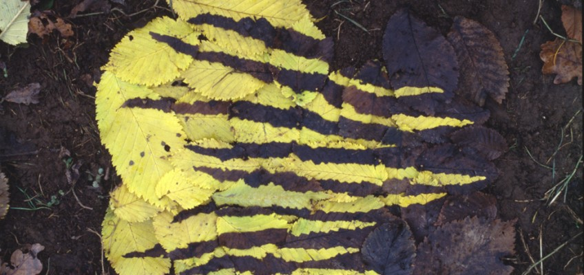 Andy Goldwworthy Yellow and Dark Elm Leafwork, Dumfrieshire 1986