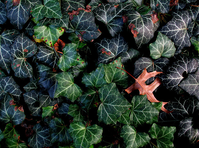 Automne Autumn Autumo Fall Herbst Herfst Otono by Esteban Cavrico
