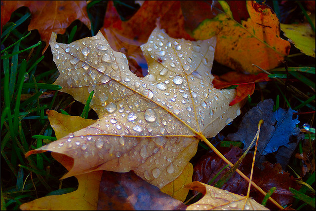 Autumn Dew… by PentaxFanatiK