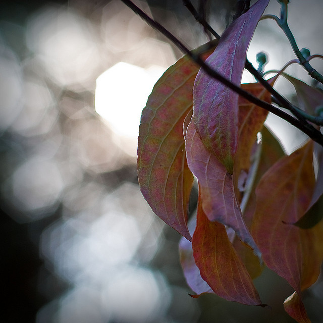 Autumn bokeh by Will Montague