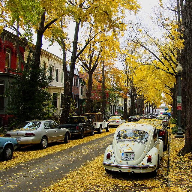 Autumn in DC by Shioshvili