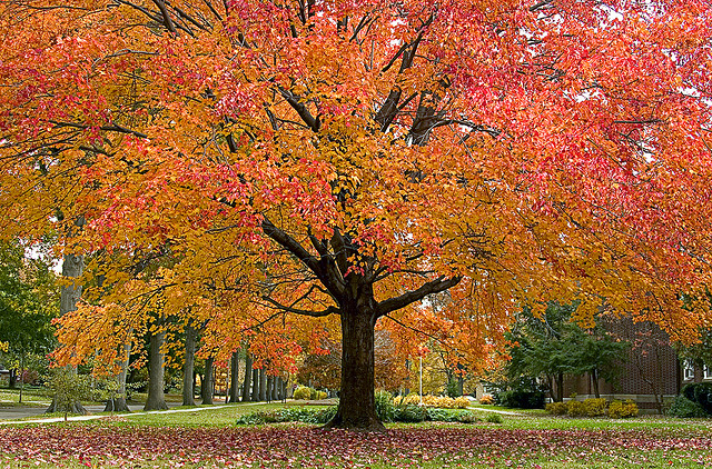 Enormous Autumn by Andrew Morrell Photography on Flickr