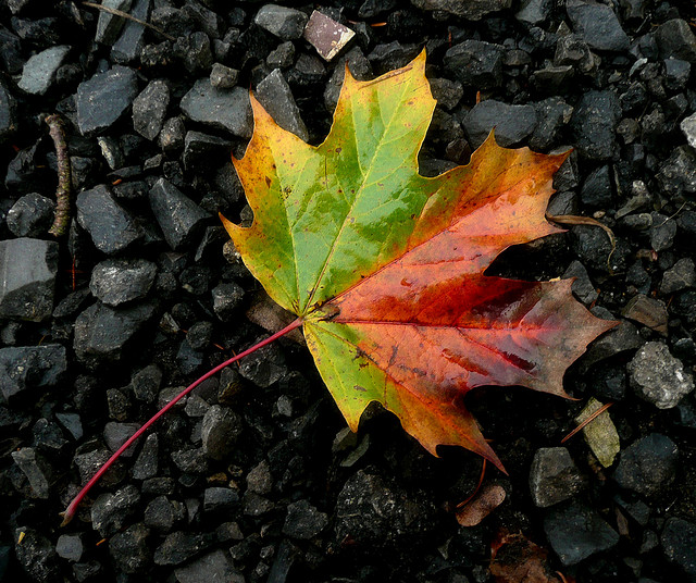 Fallen leaves on the ground by Lif…