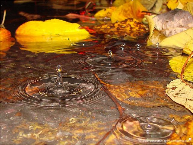 Falling rain on leaves in the gutter by Elvis Payne