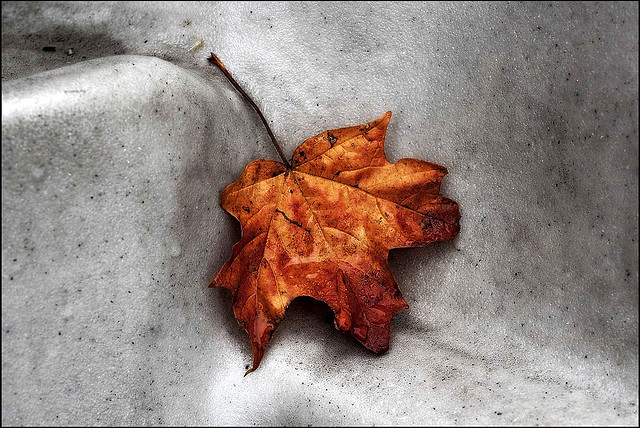 Tears for the fallen by PentaxFanatiK