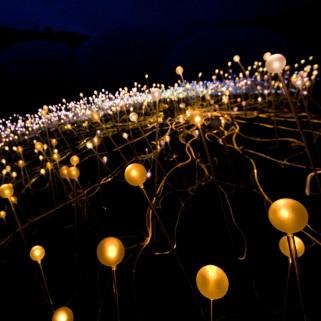 Bruce Munro Field of Light Eden Project5