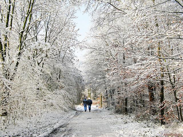 Winter Walk by Alicepopkorn