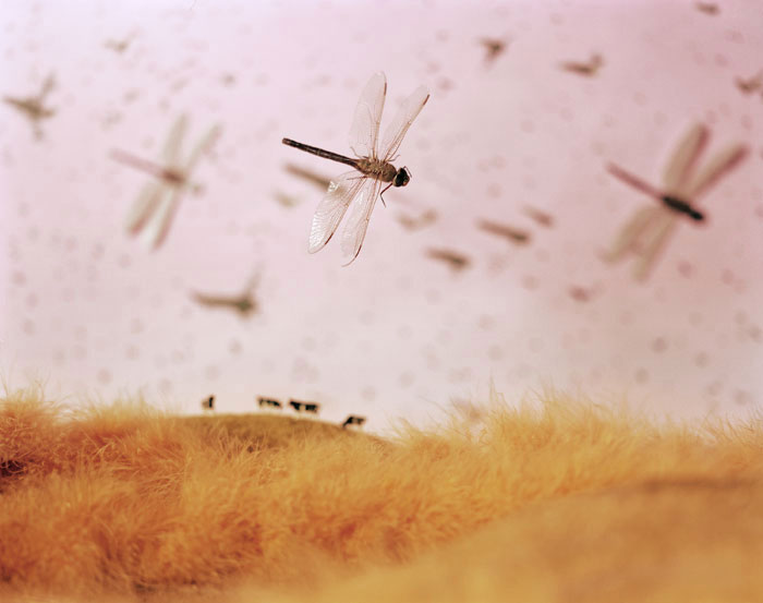 Insect Infestation 1998 by Lori Nix