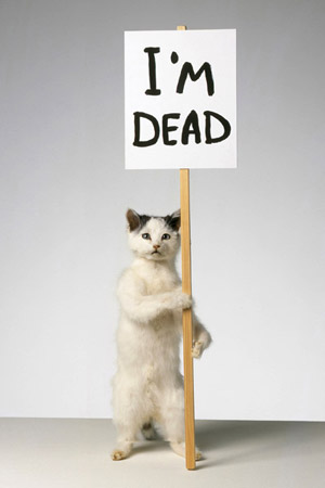 Cat, taxidermy, wood, acrylic paint sculpture 2007 by David Shrigley