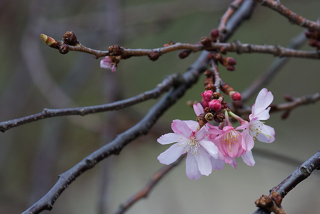 Spring 2 by bowtoo on flickr