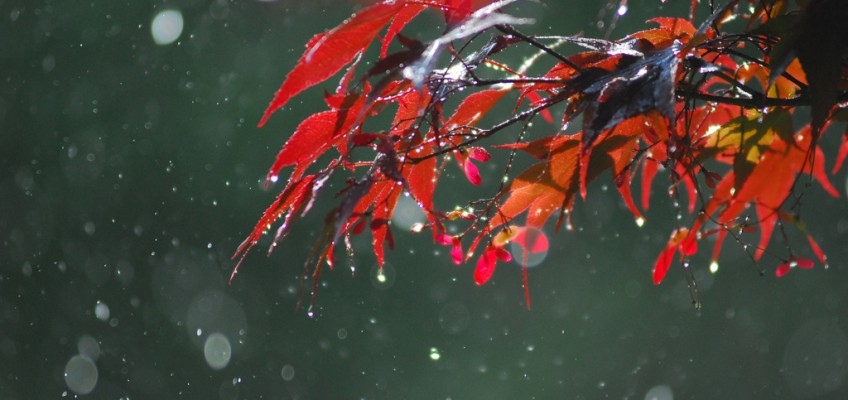 Spring Drops by Max Z on flickr