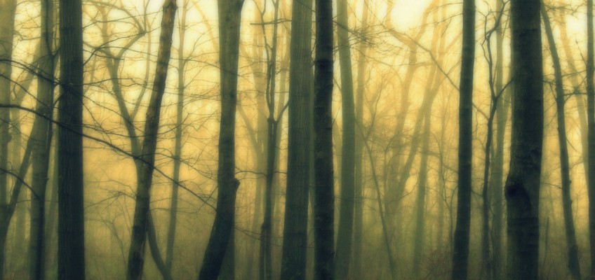 Spring Fog by Indy Kethdy on flickr