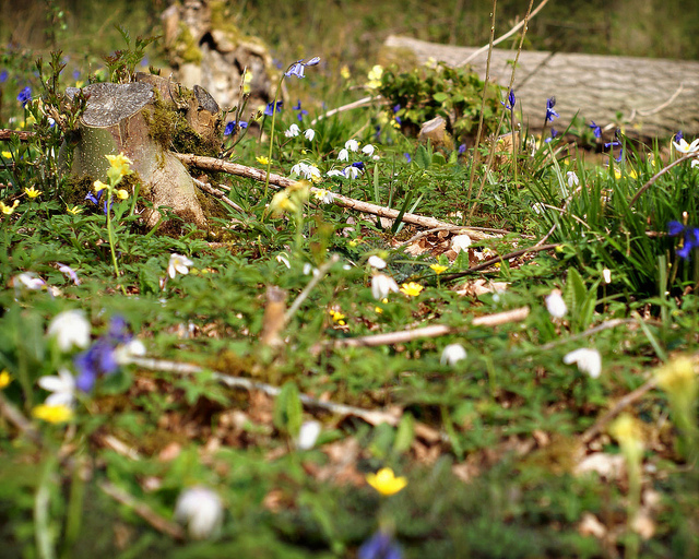 Spring Hayley Wood by fras1977 on flickr