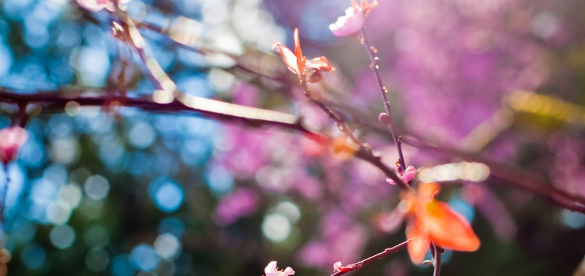 Spring Leaves by AMERICANVIRUS on flickr