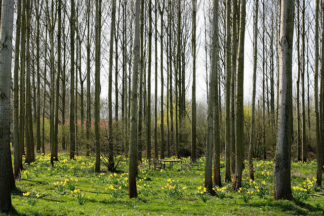 Spring by just.Luc on flickr
