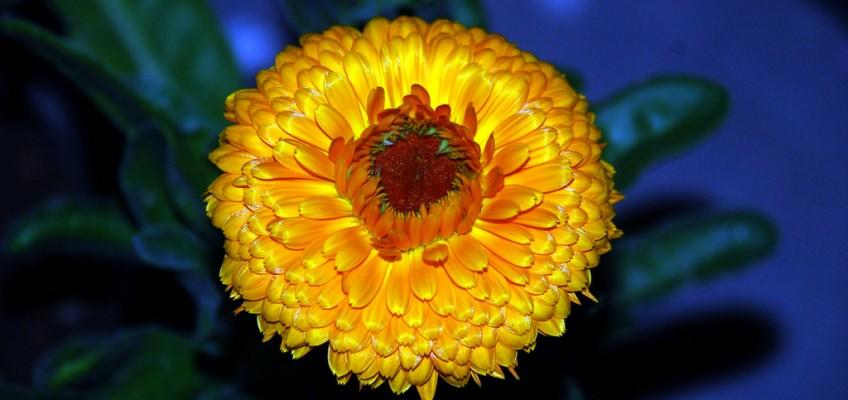 Spring flower in bloom. by ner_luv(c) on flickr