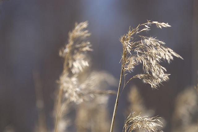 Spring hay by JarkkoS on flickr