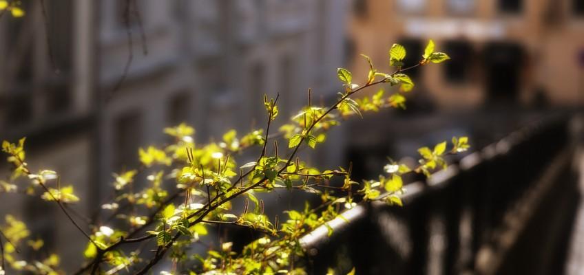 Urban Spring by aha42 | tehaha on flickr