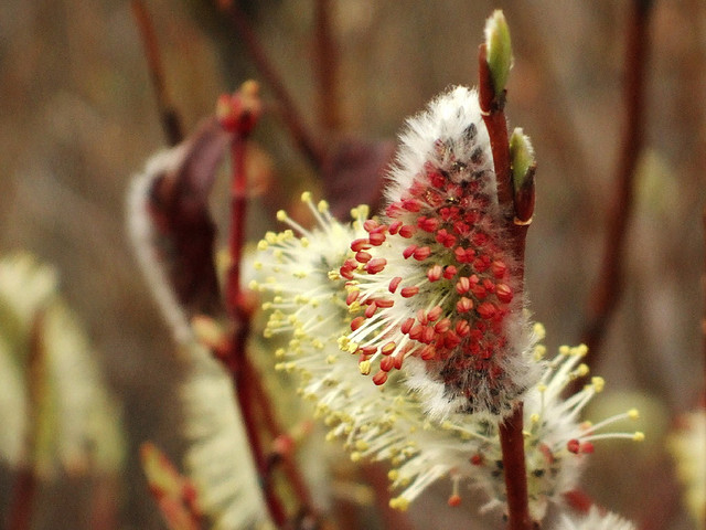 spring 1249 by Yukon White Light on flickr