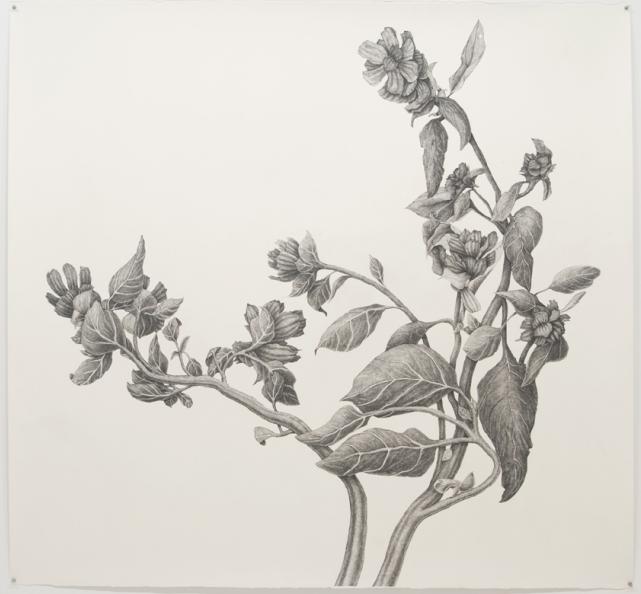 Black Weed, 2010, ink on paper, by Joan Linder