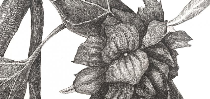 Black Weed (detail), 2010, ink on paper, by Joan Linder