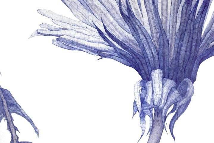Dandelion (detail), 2010, ballpoint on paper, by Joan Linder